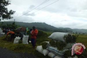 Produksi padi Gunung Kidul 13 ton/hektare