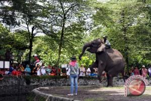 Gembira Loka Zoo siapkan pembangunan Zona Cakar