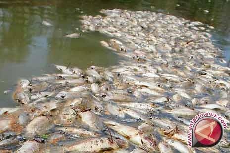 Limbah pabrik dikhawatirkan ancam populasi ikan sungai