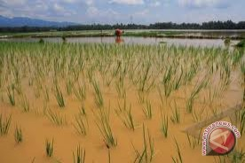 Bantul tidak beri bantuan petani terdampak banjir