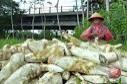 Lebaran 2017 - Penjualan makanan khas Yogyakarta naik 30 persen