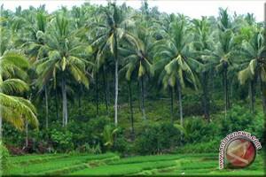 Kulon Progo remajakan tanaman kelapa 100 hektare
