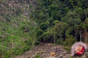 Ipkindo: tutupan hutan di DIY sangat kurang