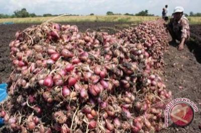 Kulon Progo petakan potensi sentra bawang merah