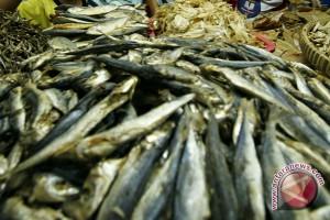 Lebaran 2017 - Satpol PP Kulon Progo sita ikan berformalin