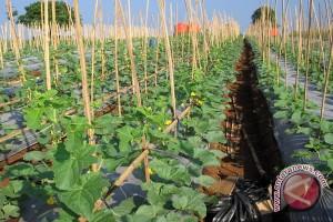 Klinik konsultasi agribisnis masuk Top 35 Inovasi