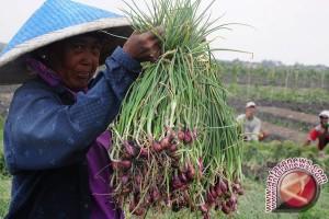 Bupati: lahan bawang merah diperluas 300 hektare