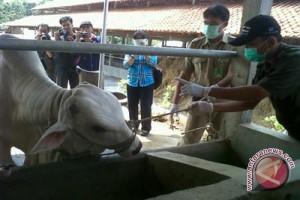 Bantul terjunkan 33 dokter kesehatan hewan kurban