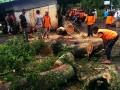 BPBD Bantul catat 13 kejadian akibat hujan