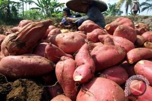 BPKP Gunung Kidul galakkan gerakan pangan lokal