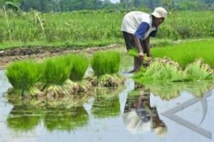 Kementan siapkan sepuluh politeknik cetak tenaga terampil pertanian