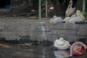 Gl Zoo berhasil kembangbiakkan burung dilindungi