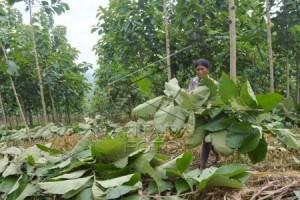DIY dorong masyarakat dukung perluasan hutan rakyat