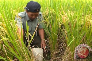 BPTP Yogyakarta kembangkan sistem pertanian basah kering