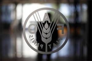 FAO: Timur Tengah-Afrika Utara akan menghadapi bahaya kekeringan