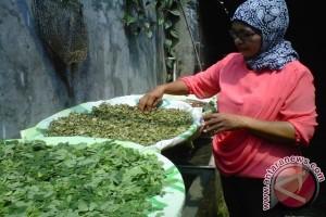 KWT Bantul produksi minuman seduh daun kelor