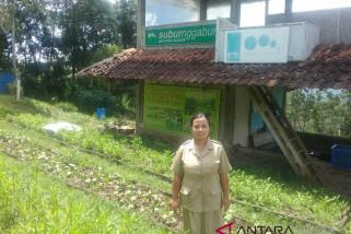 SD Pangudi Luhur Samigaluh kembangkan pertanian organik