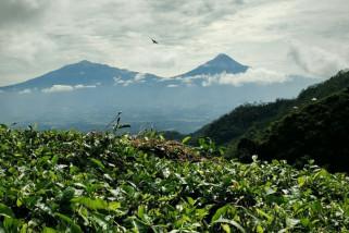 Retribusi wisata Kulon Progo capai Rp3,386 miliar