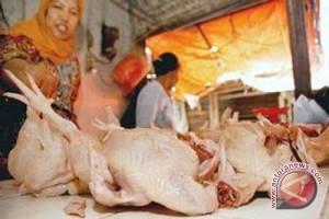 Awas! Spekulan Ayam Ras Jelang Ramadhan