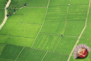 Sip! Kalteng Kembali Cetak Sawah 4.600 Hektare