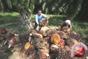 Dinas Barito Utara Fasilitasi Pembentukan Koperasi Sawit