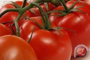 Tomat Itu Sayuran atau Buah?