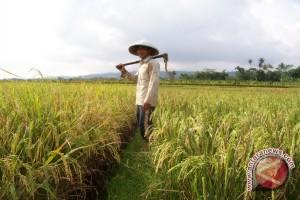 Nah! Penyuluh Tak Aktif Temui Petani, DKPP Siap Beri Sanksi Tegas