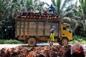 Indonesia Perkuat Pasar Produk Sawit di India