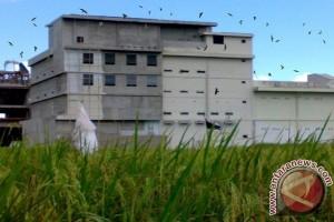 Masih Banyak Izin Bangunan Sarang Walet Di Palangka Raya Ilegal