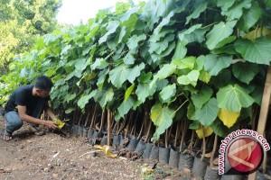 DKPPP Barsel Terus Kembangkan Sektor Pertanian