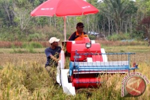 Barut Kembangkan Padi Teknologi Hazton  1000 Hektare