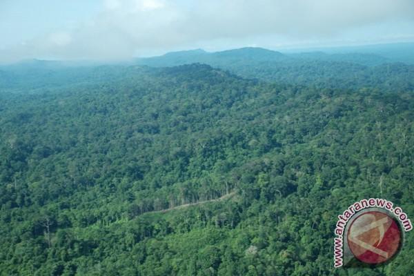 Wow! Ternyata Hutan Kalteng 5,1 Juta Hektare Dikuasai Para Pengusaha