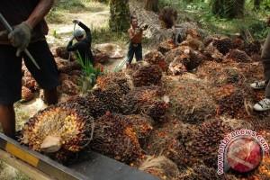 Waduh! PT GAP Di Duga Garap Lahan Warga Desa Kandan Hutan Produksi?