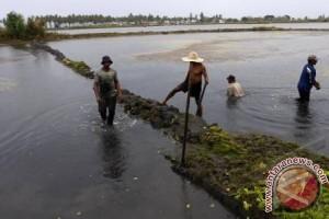 Pemkab Seruyan Akan Rehabilitasi 500 Hektare Lahan Tambak