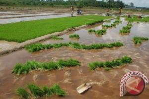 Seruyan Cetak Sawah Baru 1.000 Hektare