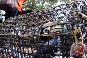 Pengawasan Hewan Liar Dilindungi Perlu Diperketat, Kata Anggota DPRD Kotim