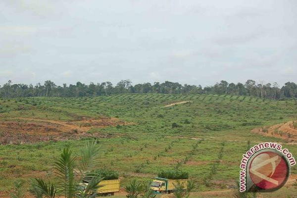 Wow! Warga Desa Di Seruyan Terima Lahan Plasma Seluas 3.125 Hektar
