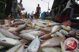 Gelombang Tinggi Picu Kenaikan Harga Ikan di Sampit