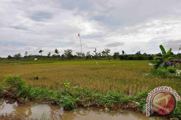 Alih Fungsi Lahan Ancaman Pertanian Lamandau