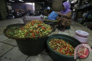 Harga Cabai Rawit di Sampit Capai Rp150.000/Kg