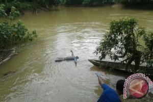 Pencuri Sarang Walet Tertangkap di Bartim, Satu Ditemukan Tewas