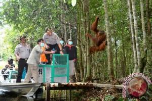 Polres Kapuas Komitmen Lindungi Satwa Orangutan