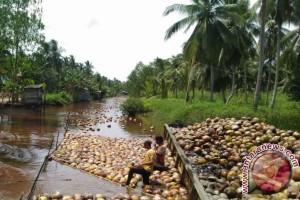 Potensi Buah Kelapa di Seruyan Dilirik Unilever