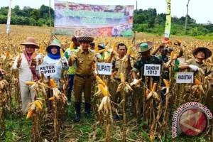 Barito Utara Ditargetkan Tanam Jagung 52 Ribu Hektare Hingga 2020