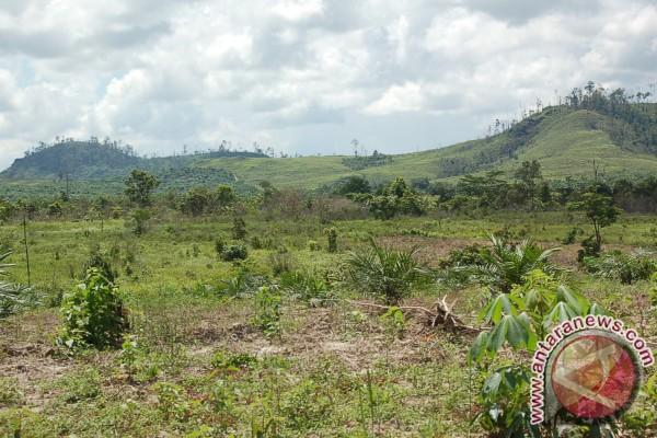 Bupati Ini Sebut Jumlah Perkebunan Rakyat Masih Sedikit