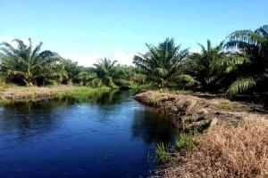 Diduga Merusak Ekosistem Sungai, PT TASK Dilaporkan Warga ke Polisi