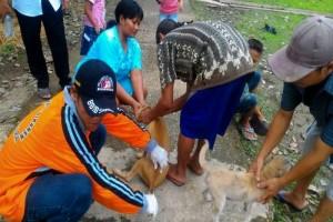 Ratusan Hewan di Barito Utara Divaksinasi Rabies