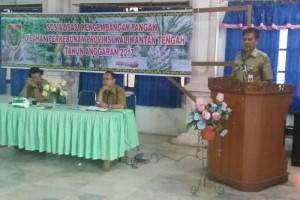 Sip! Pemprov Kalteng Berupaya Wujudkan Swasembada Jagung