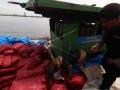 Petugas Polair Polda Sumut menggunakan anjing pelacak untuk memeriksa barang bukti bawang ilegal yang diangkut melalui kapal, di Belawan, Medan, Sumatera Utara, Senin (5/6). Polda Sumut berhasil menangkap lima ABK dari KM Silau dengan barang bukti 19 ton bawang merah ilegal asal Malaysia yang akan diselundupkan ke Pelabuhan Belawan. ANTARA FOTO/Septianda Perdana