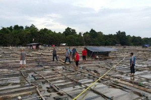 Pemilik Kayu Log 7.500 Batang Diamankan Polisi, Tapi Belum Tersangka?
